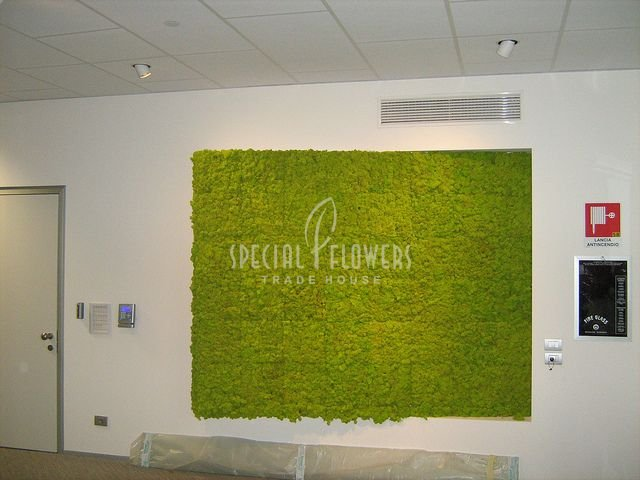 Special Flowers-greenwall (6)