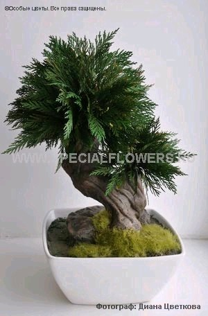 bonsai_specialflowers01