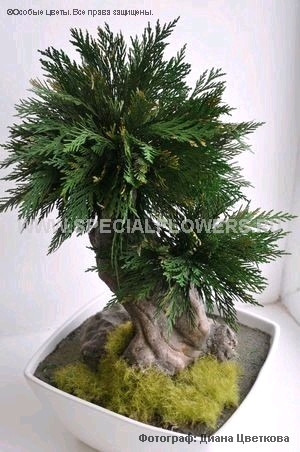 bonsai_specialflowers02