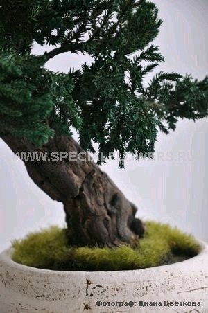bonsai_specialflowers04