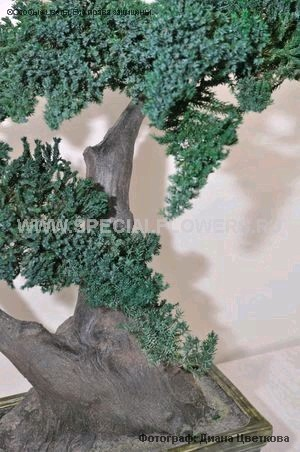 bonsai_specialflowers10