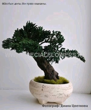 bonsai_specialflowers03