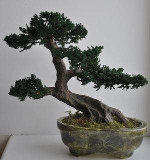 bonsai_specialflowers05
