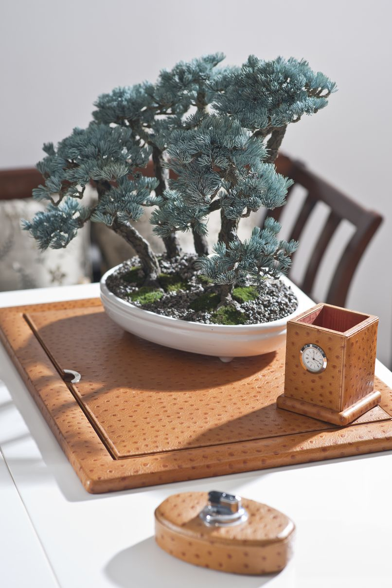 bonsai_v_interiere